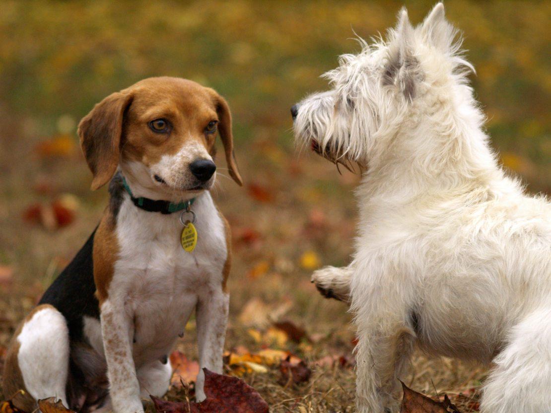animal-photography-animals-dogs-38008.jpg