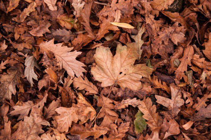autumn-dry-dry-leaves-632075.jpg
