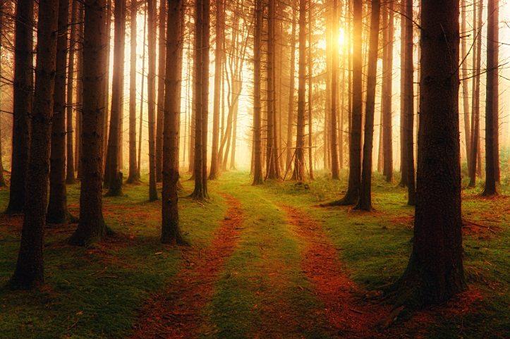 backlit-branches-dawn-1103971.jpg