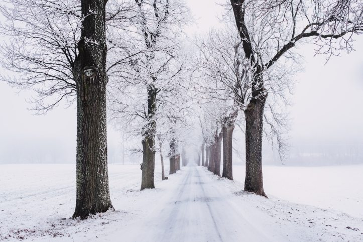 branch-cold-fog-839462